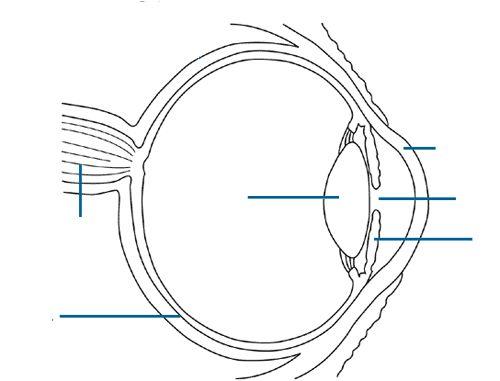 Anatomy Eye Diagram To Label Eye Anatomy Eye Anatomy Diagram Anatomy