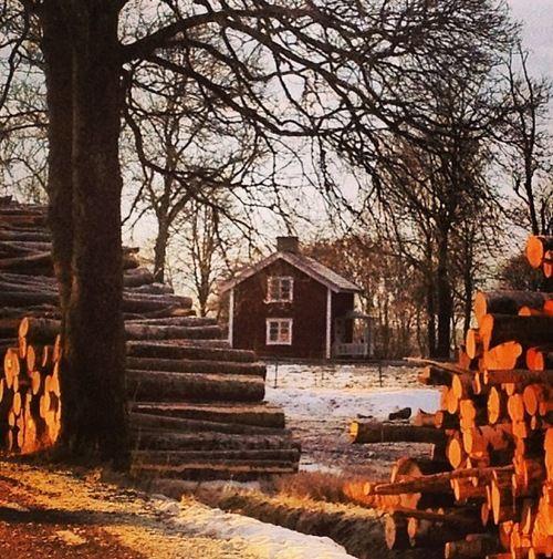 : Cottages Cabins Loghomes, Winter Cabin, Split Logs, Logs Waiting, Farmhouses Barns, Cozy Cabin, Farmhouse Shappy Christmas, Microfarming Homestead
