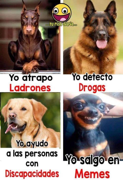Perros Graciosos Http Enviarpostales Es Perros Graciosos 271 Perros Animales Funny Animal Memes Funny Spanish Memes Animal Memes