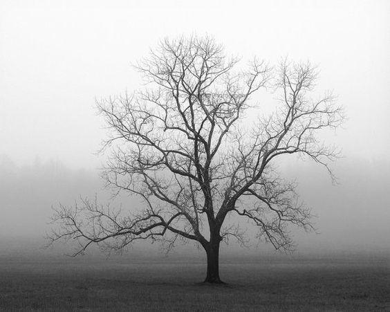 ... lone tree, fog, foggy, Velvet Sunrise | Le'veon bell, Velvet and Trees