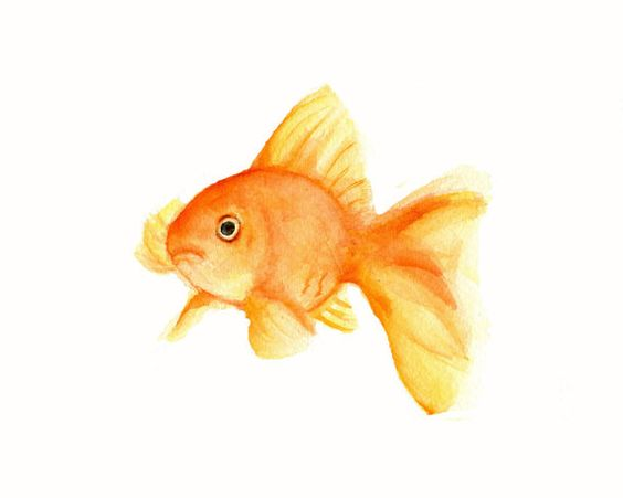 Goldfish Watercolor print 5 X 7 por Marysflowergarden en Etsy