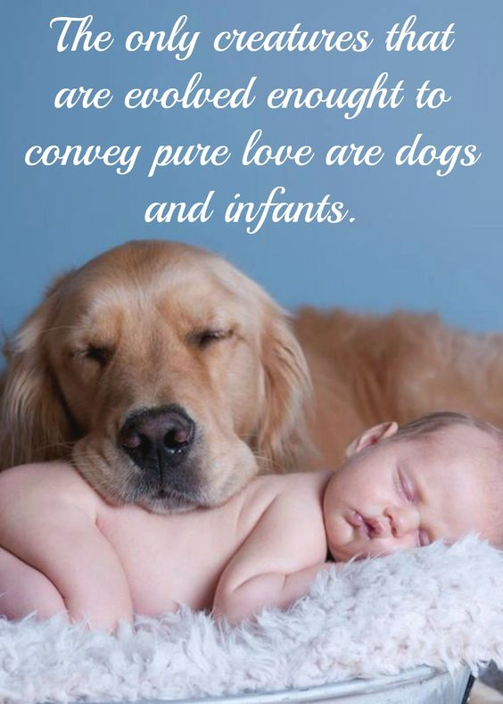 Dogs And Kids What Can Be Better Dog Quote Saying Www