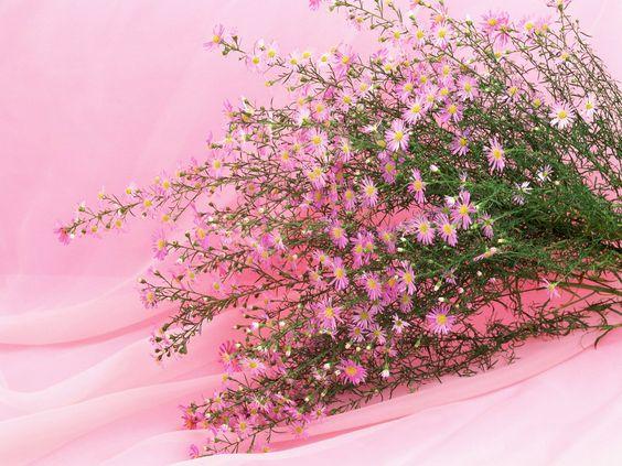 images de fleurs, fleurs fonds d'écran, vecteur, milieux roses, matériel vert