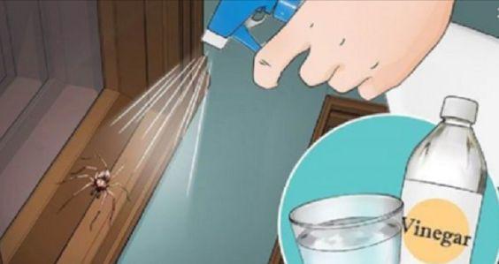 Aprende a preparar este repelente que hará que ninguna araña aparezca más nunca en su cocina u hogar.
