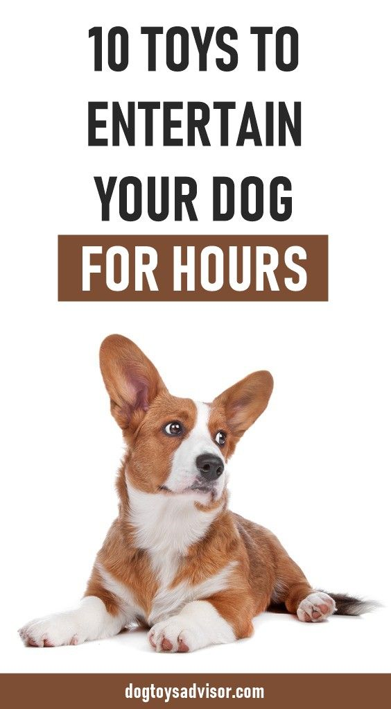 Do You Want To Keep Your Dog Busy When He S Alone Or While You Re