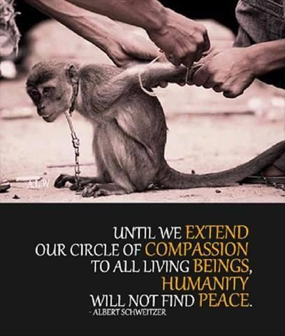 Compassion quote by Albert Schweitzer. With a photo of the sad tradition of 'Topeng Monyet', a dancing monkey in Indonesia.