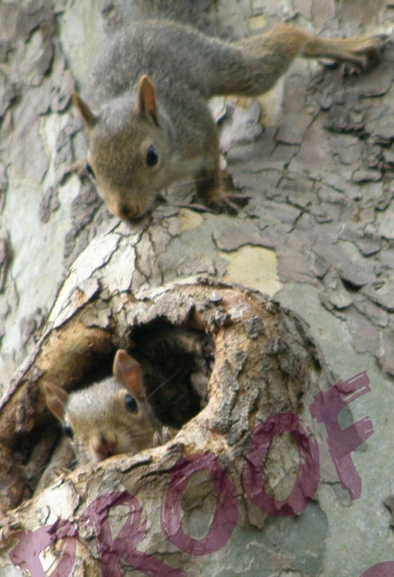 Cute Squirrel Siblings Get in Trouble by PicturePerfectChaos