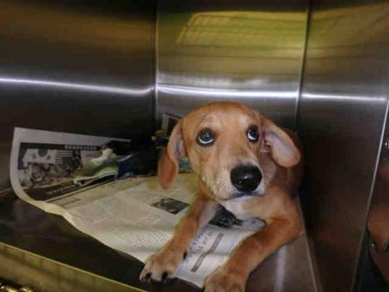 MAXIE - URGENT - CITY OF LOS ANGELES SOUTH LA ANIMAL SHELTER in Los Angeles, CA…