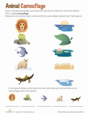 ... worksheets and kids : Kindergarten Worksheets Animal Coverings