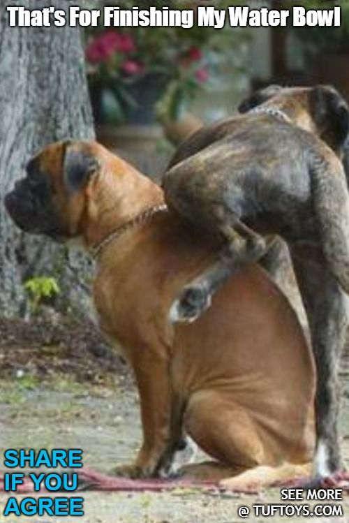 Funny Dog Memes Part 9 Funny Dog Memes Dog Memes Dogs