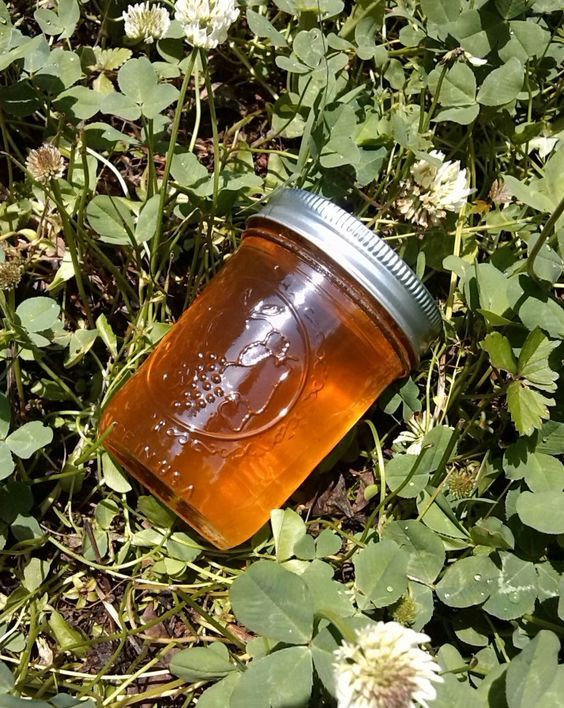 Easy White Clover Jelly