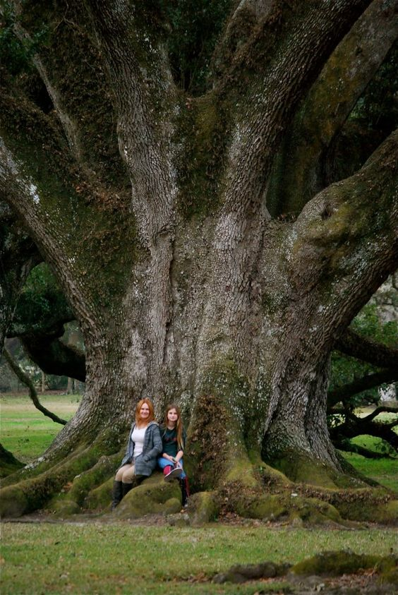 Me and my daughter - HUGE Oak Tree!
