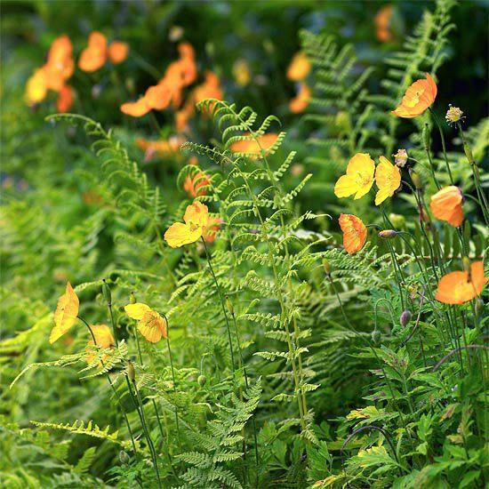 21 Easy Ways To Make Your Garden The Prettiest It S Ever Been Ferns Garden Planting Herbs Woodland Garden