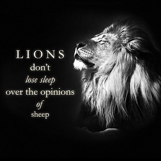 Lions Don T Lose Sleep With Images Lions Dont Lose Sleep Lion