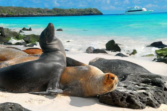 seals on the stunning beaches at Galapagos