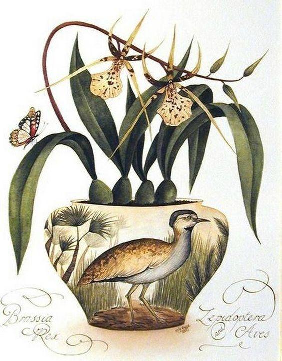 Kelly  Higgs  (b.1978)  —  Brassia Rex (585×750)