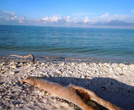 Honeymoon Island, Florida... oh I miss you right now
