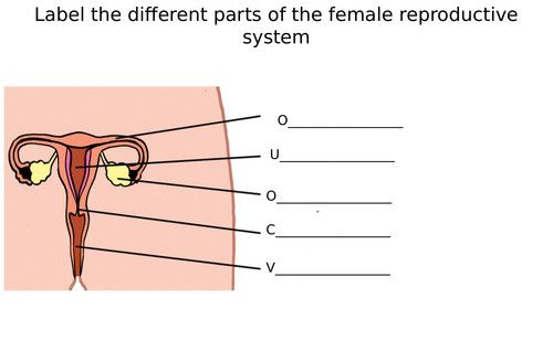 Female Reproductive System Diagram Labeled Awesome Male Female Reproductive System Dia In 2020 Female Reproductive System Reproductive System Word Problem Worksheets