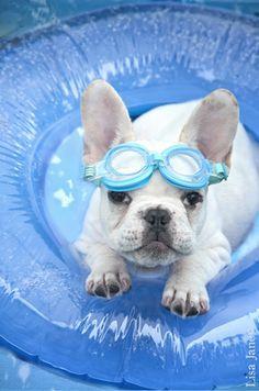 Qual Cachorrinho Nadador é o Mais Fofo? http://bit.ly/1UxGEAS