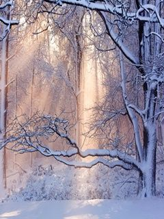 Download Winter Nature mobile wallpaper is compatible for Nokia, Samsung, Htc, Imate, LG, Sony Ericsson mobile phones.