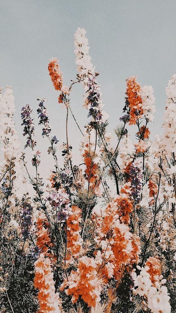 48 Cheap And Beautiful Diy Planters Ideas For Beautiful Garden Flower Phone Wallpaper Iphone Background Wallpaper Pretty Wallpapers Beauty aesthetic aesthetic wallpaper