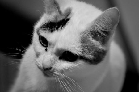 Cat Photo by Antonello Putignani -- National Geographic Your Shot