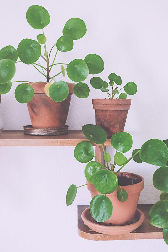 pil a family gardens flower and plants. Black Bedroom Furniture Sets. Home Design Ideas