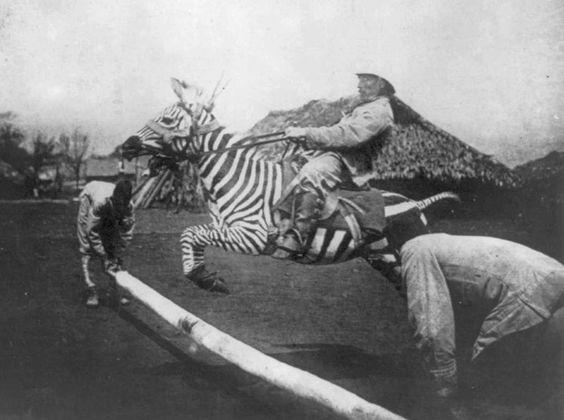 Ride a zebra...
