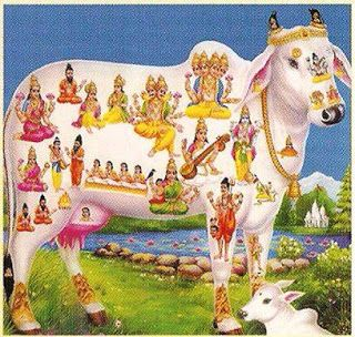 "From Thompson reading: The sheep as articulated in this piece shares similar reverence to the cows for Hindus. We believe that the cow, since she gives us milk comes close to representing ""our mothers"". In addition, the cow makes agriculture possible and is revered and honored in many spiritual and sacred religious practices. For these reasons cows are scared to us, thus killing and eating them is a great crime to humanity."