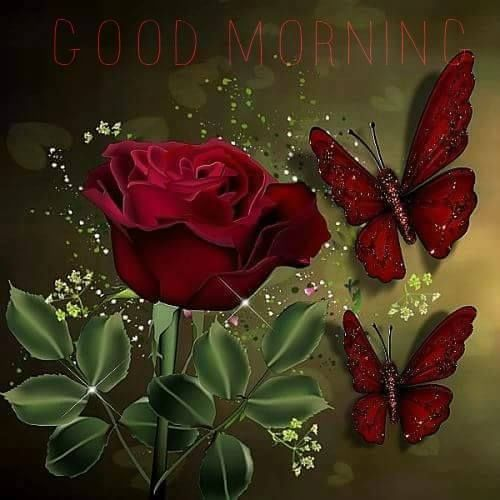 Red Butterfly Rose Good Morning Image Butterfly Rose Good Morning Good Morning Quotes Good Morning Sayings Red Butterfly Butterfly Flowers Good Morning Images