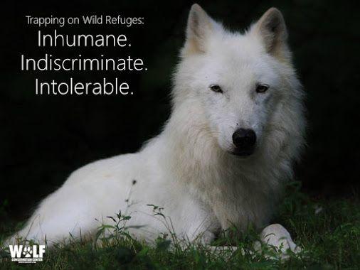 ANIMAL FANTASTIQUE - Comunidade - Google+