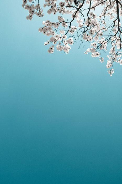 azul celeste: