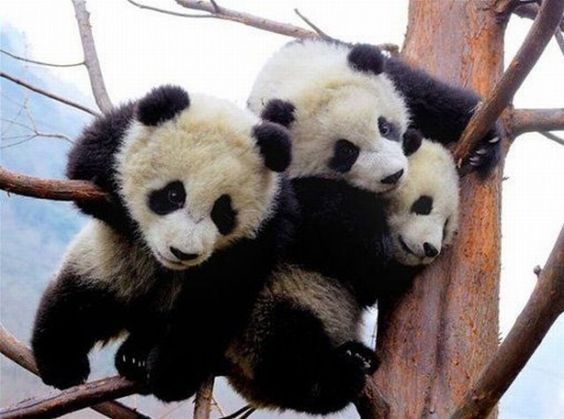 pandas!...me and my brother y sis :)