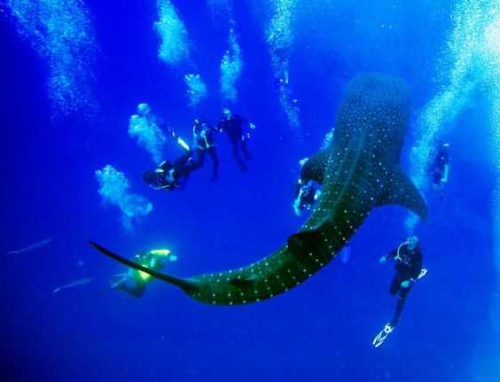 Caribbean Scuba Diving & Snorkeling Vacations from Adventures in Belize