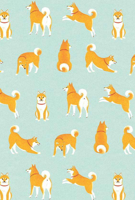 おしゃれでかっこいい柴犬集合の壁紙