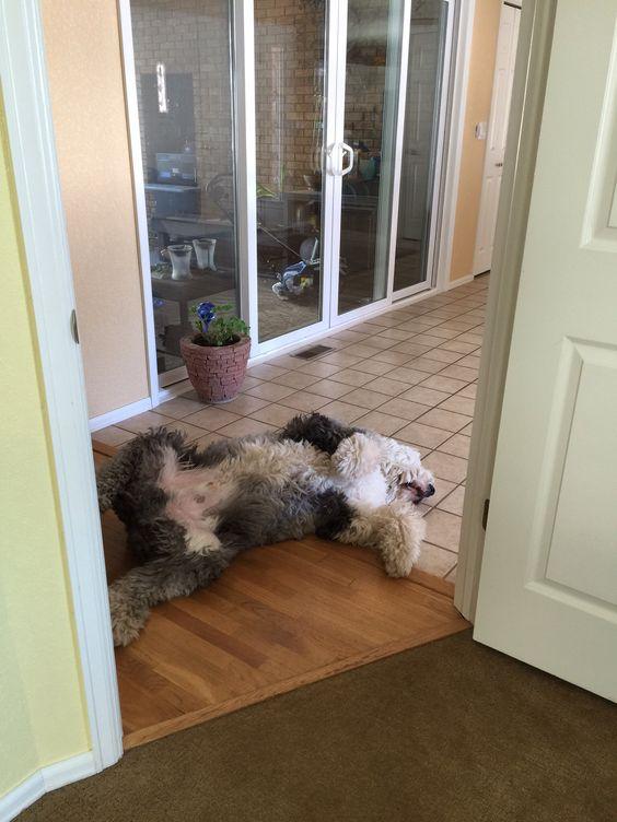 Skiilar napping