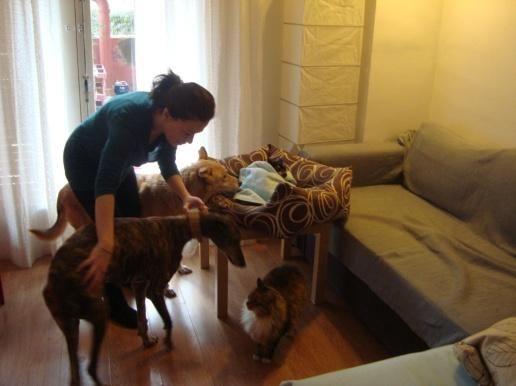 cachorro en su nuevo hogar