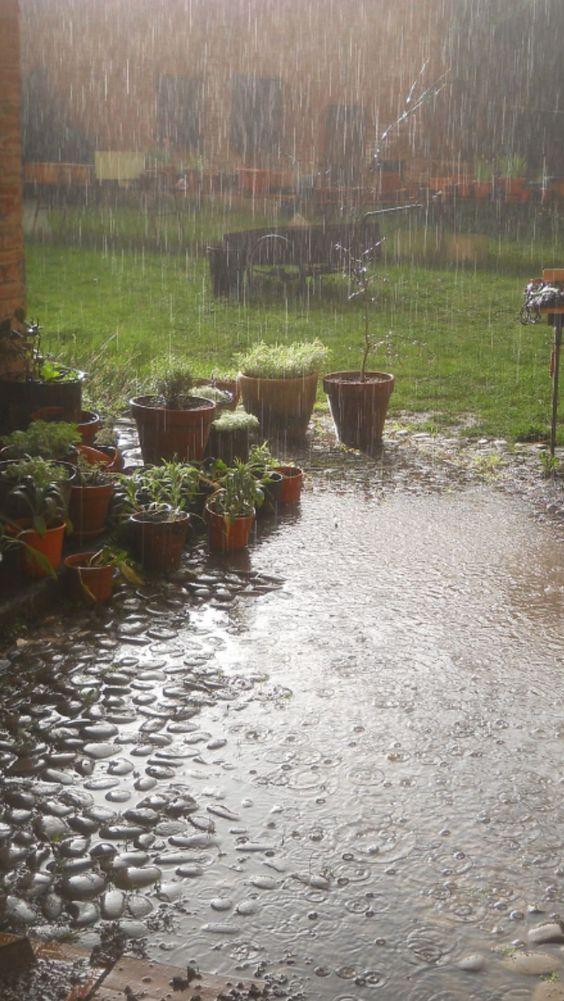 Drenched...#rain #raining #rainydays #nature