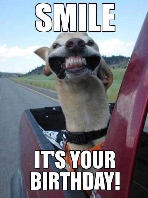 Pin By Kelly Bariteau On Birthdays Cute Animals Happy Dogs Animals