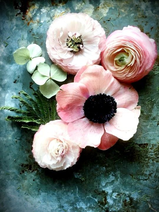 Most Current Cost Free Ranunculus Anemone Tips When Flowering Incandescent Bulbs Is One Regarding Nature S M Spring Flower Arrangements Flowers Spring Flowers