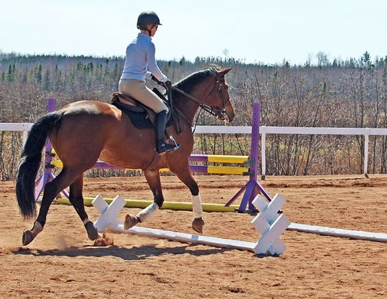 cavaletti walk, cavaletti canter, cavaletti trot, jec aristotle ballou, cavalletti exercises, horse cavalletti, training a horse, horse gait, equine gait, equine conditioning a horse: