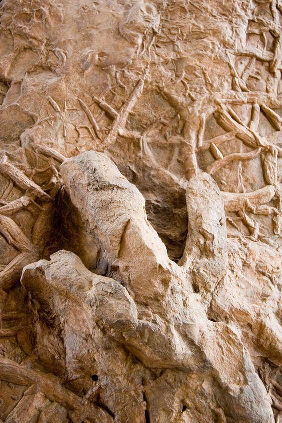 A petrified dinosaur footprint shown in a mud cast