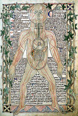 Illustration du xiiie siècle montrant les veines.