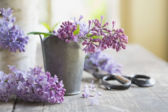 Genus: Syringa BUY IT   When it blooms: Late May, and only for about three weeks Why we love them: Some varieties can withstand temperatures of -60°F. PLUS: 12 Facts Every Lilac Lover Should Know