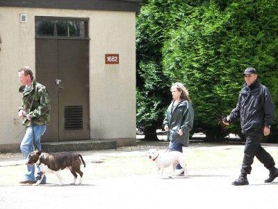 Lynne Davies Dog Training - Photo Gallery