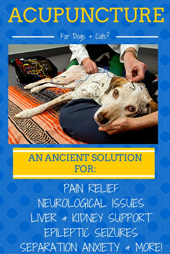 Does your dog or cat suffer from chronic pain, epileptic seizures, liver and kidney issues, or separation anxiety? Acupuncture may be the answer that gets right to the point!