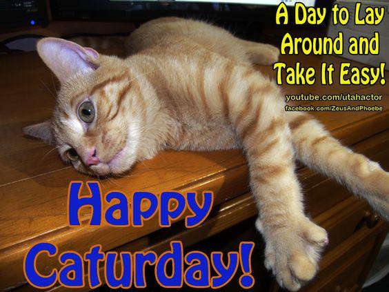 Watch kitten videos here https://www.youtube.com/user/utahactor: