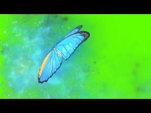 Borboleta Magica Azul Effec Green Screen Chorma Key Youtube Green Screen Video Backgrounds Chroma Key Greenscreen