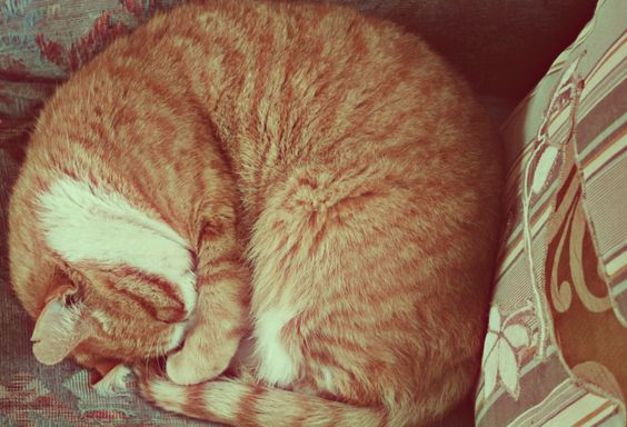 Our orange tabby is an over achiever in the area of sleeping.