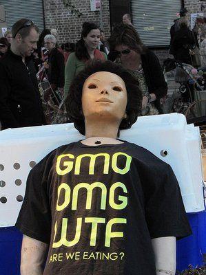 Monsanto čili časovaná bomba GMO